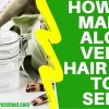 how to make aloe vera hair gel for hair growth